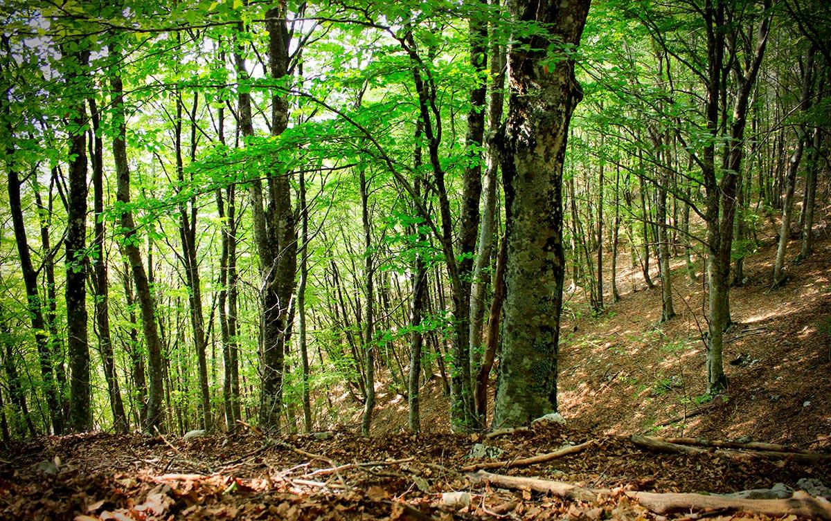 Particolare di una foresta di faggi - Parco Naturale dei Monti Aurunci
